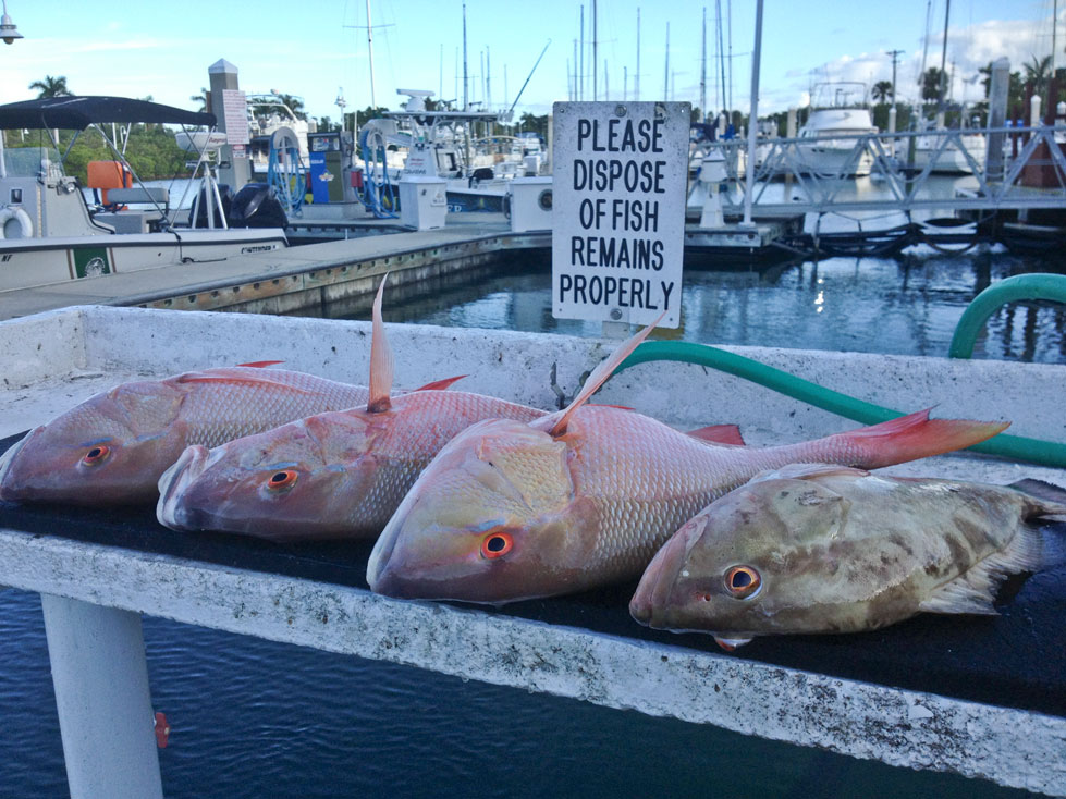 Mutton snapper key west fishing report for Fish in key west