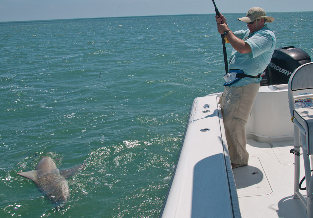 A associated with fishing trips in islamorada florida for Shark fishing in florida