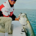 Tarpon Season Slows Down