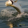January Tarpon Fishing Report (yes its a thing)