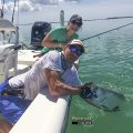 Tarpon Fishing Report