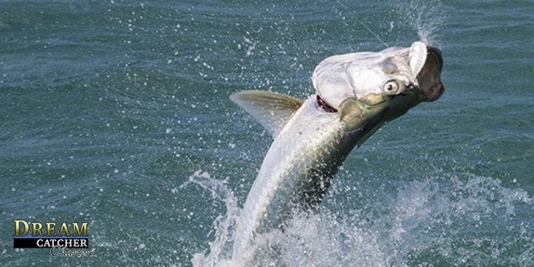 tarpon-jumping-photo