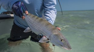 bonefish red tide