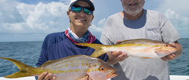 Yellowtail Snappers Reef fishing