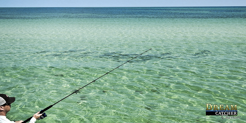 Daisy chain, tarpon, key west