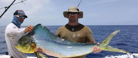 Dolphin Key West
