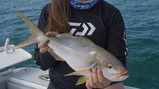 yellowtail snapper reef fishing key west