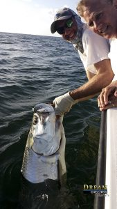 Tarpon, fishing, release