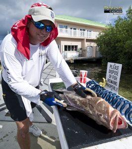 Red Grouper, filet fish, grouper, filet table, fishing, Key West