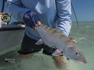 Bonefishing Bonefish