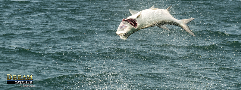 tarpon-fishing-key-west-report