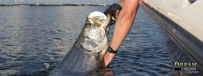 tarpon-fishing-key-west