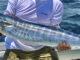 wahoo deep sea fishing