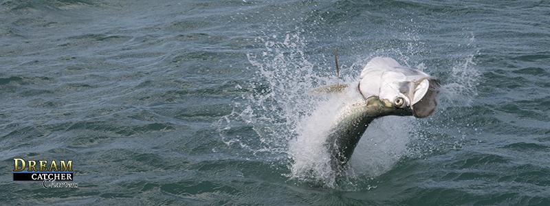 tarpon jumping when hooked