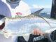 key-west-fishing-report-november