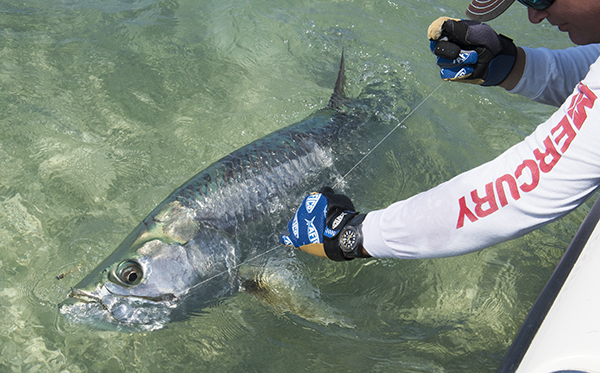 Key West Fishing Seasons Calendar Tarpon Fishing