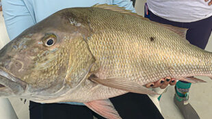 mutton snapper reef fishing Key West