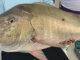 mutton snapper reef fishing Key West