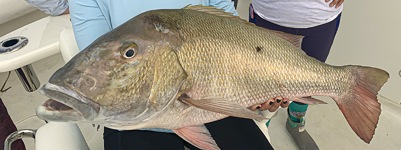 reef-fishing-mutton-snapper