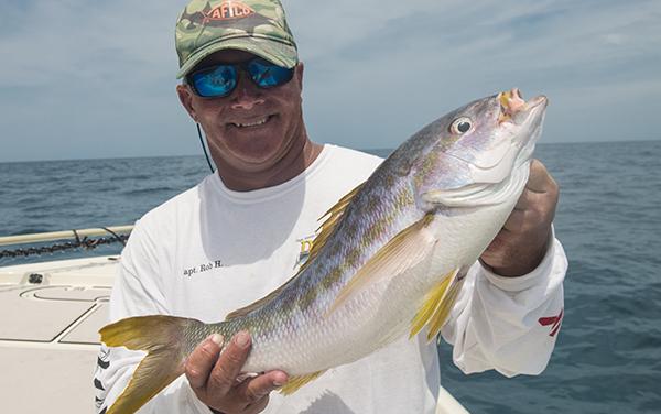 Yellowtail Snapper Key West